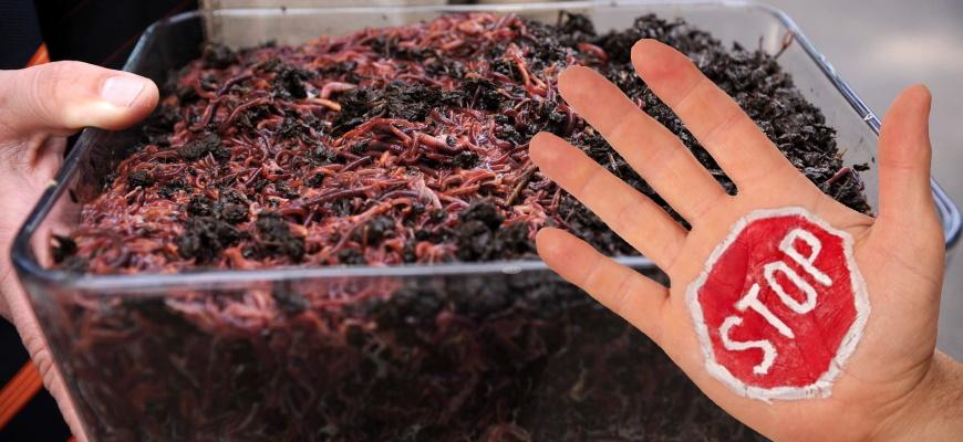 Запрещенные продукты при кормлении червей