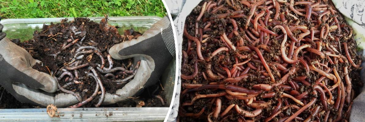 Хранение рыболовных червей