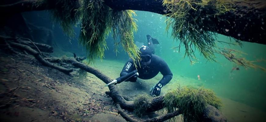 Охотится под водой